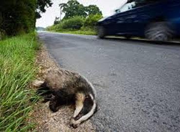 Wild life incident